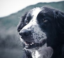 Dog Portrait by Karen Havenaar