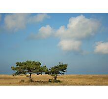 Lone Trees Photographic Print