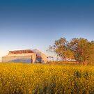 Barn yard Canola field of Sunshine  by LJ_©BlaKbird Photography