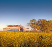 Barn yard Canola field of Sunshine  by LJ_©BlaKbird Photography