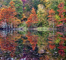Reflections At Beavers Bend by Carolyn  Fletcher