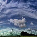 Bluff Point Wind Farm Gates, Woolnorth...NW Tassie by kym banks