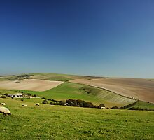 Sheep And Barn. by glynk