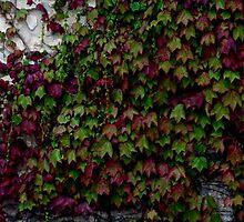Botany 10 by Roddy Fitzgerald