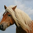 Horse portrait by Trine