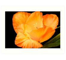 Gladiolus Art Print