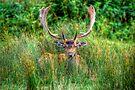 Fallow Deer 3.0 by Yhun Suarez