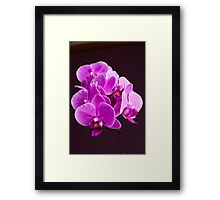 Plant, Orchid, Phalaenopsis, Pink Flowers  Framed Print