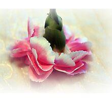 Pirouette Photographic Print