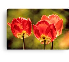 Glowing Red Tulips Canvas Print