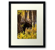 Bull Moose in Fall Foliage Framed Print