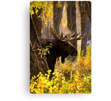 Bull Moose in Fall Foliage Canvas Print