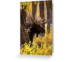 Bull Moose in Fall Foliage Greeting Card