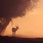 Lonely Deer At Dawn by purplejonno