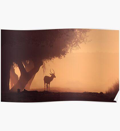 Lonely Deer At Dawn Poster