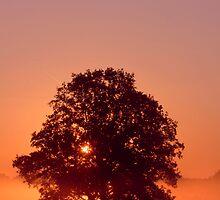 Sunrise Silhouette by purplejonno