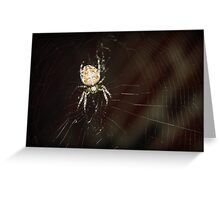 garden spider on a web Greeting Card