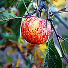 Colorful Apple by Bumzigana