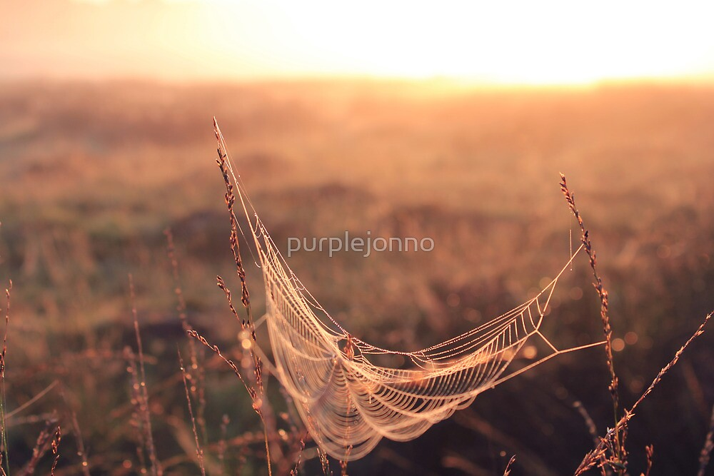 Spider Hammock by purplejonno