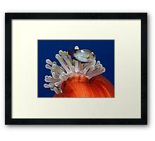 False Nemo Framed Print