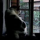 How Much Is That Kitty In The Window by 0lillypilly0