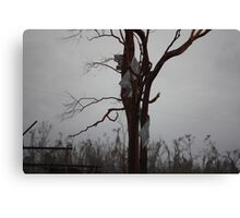 part of house roof up a tree Cyclone Yasi - Kennedy, North Queensland, Australia Canvas Print