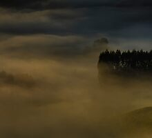 Drifting Forests of the Forgotten World by Peter Kurdulija