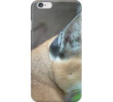 Unbelievable Caracal
