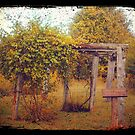 Uwharrie Grape Arbor (TTV) by lroof
