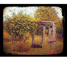 Uwharrie Grape Arbor (TTV) Photographic Print