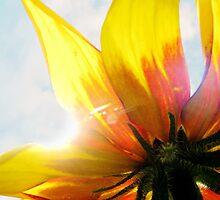 Sun Seeker 2 by Tracy Friesen