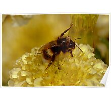 Bee on Marigolds Poster