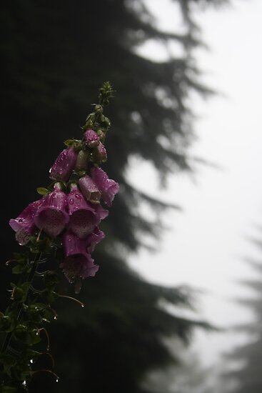 Dripping Foxglove by Thomas Adams