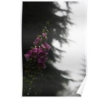 Dripping Foxglove Poster