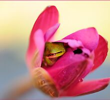 Dwarf Frog hiding in Lotus Flower by Susan Kelly
