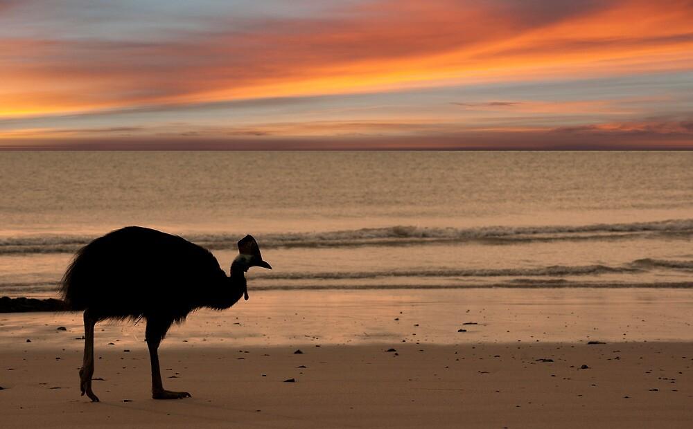 Cassowary Sunset by Jenny Dean