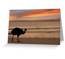 Cassowary Sunset Greeting Card