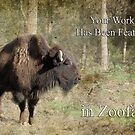 Feature Banner For Zoofari by Eve Parry