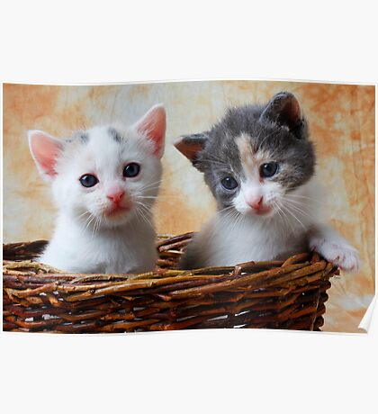 Two kittens in basket Poster