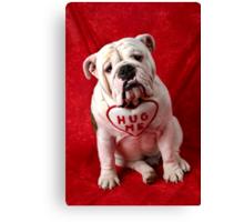 English Bulldog puppy hug me Canvas Print