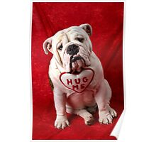 English Bulldog puppy hug me Poster
