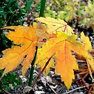 Autumn Gold by shadyuk