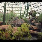 Indoor Desert Habitat (TTV) by lroof