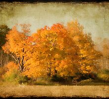 Trees On fire by Michelle Anderson