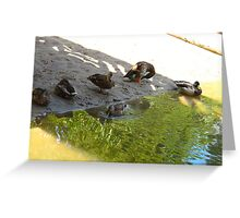 Roosting Greeting Card