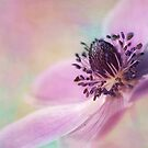 sunlit anemone by Teresa Pople