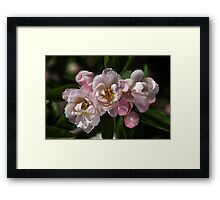 Crabapple Flowers  Framed Print