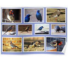 Birds! Birds! Birds! Poster
