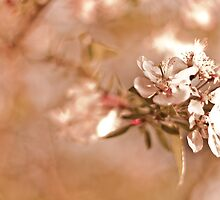 Vintage blossom by Spitze