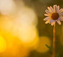 For the love of sun by Spitze